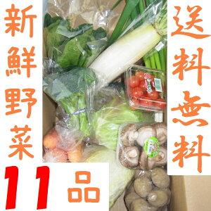 山口・九州産【送料無料】 『新鮮野菜の詰め合わせ11種類』(白ネギ・きゅうり・小松菜・玉葱・ピーマン他)