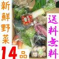 山口・九州産【送料無料】『新鮮野菜の詰め合わせ14種類』(白菜・ほうれん草・ネギ・キャベツ他)
