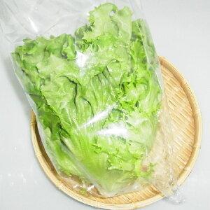 福岡県産『グリーンリーフ』【野菜詰め合わせセットと同梱で送料無料】