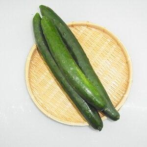 宮崎県産『きゅうり(キュウリ)』【野菜詰め合わせセットと同梱で送料無料】