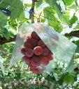【バイオレットキング】赤黒系の種なしぶどう2kg箱(3房前後)最新&希少品種【送料無料】