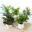造花 インテリアグリーンミニポット5点アソートセット 観葉植物 【配送日指定不可】 CT触媒