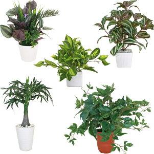 【CT触媒】ミニグリーンポット