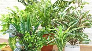 造花フェイクグリーン5個セットお買い得フェイク観葉植物グリーン光触媒【あす楽対応】