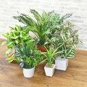 造花 フェイクグリーン5個セット お買い得 フェイク 観葉植物 グリーン 光触媒