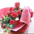 想いをこめて!豪華な紅いバラの花束N
