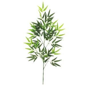 バンブー(笹竹)のブランチ