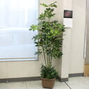 CT触媒加工のカポックツリー180〔TB938〕 snb 造花 フェイク