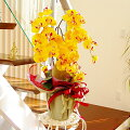 【送料無料・CT触媒加工】優雅で高貴な胡蝶蘭の鉢植