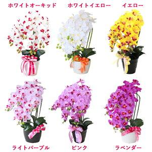 【CT触媒】常滑産陶製鉢に入った胡蝶蘭の鉢植