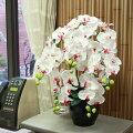 【CT触媒】常滑産陶製鉢に入った胡蝶蘭の鉢植【品質保証★花】