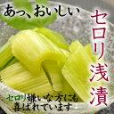 セロリ浅漬 シャキシャキ食感がおいしいサラダ感覚のおつけもの【クール冷蔵便】