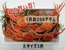 [冷凍][お買い得品]香住のセイコガニ 大サイズ1匹(200g〜)が5匹セット(親ガニ・セコガニ・コッペガニ・メスガニ)…