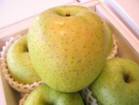 王林りんご大玉サイズ【楽ギフ_包装選択】【楽ギフ_のし宛書】【楽ギフ_メッセ入力】