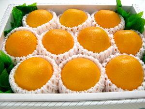 オレンジ10個入り【楽ギフ_包装選択】【楽ギフ_のし宛書】【楽ギフ_メッセ入力】