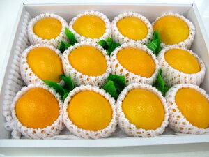 オレンジ12個入り【楽ギフ_包装選択】【楽ギフ_のし宛書】【楽ギフ_メッセ入力】