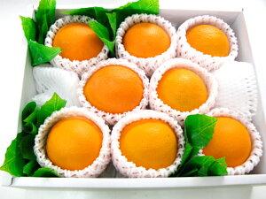 オレンジ8個入り【楽ギフ_包装選択】【楽ギフ_のし宛書】【楽ギフ_メッセ入力】