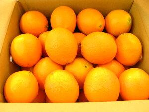 オレンジ30個入り【楽ギフ_包装選択】【楽ギフ_のし宛書】【楽ギフ_メッセ入力】