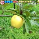 【送料無料】岩手県産 産地直送!ご自宅用 訳ありシナノゴールド5kg(20〜24玉)