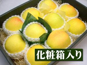 長野県産 特選青リンゴ トキ[大玉10個入り化粧箱]