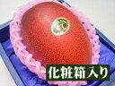 とっておきのギフトにも最適★宮崎県産 完熟アップルマンゴー 太陽のタマゴ[大玉1個入り化粧箱]【父の日】【父の日ギ…