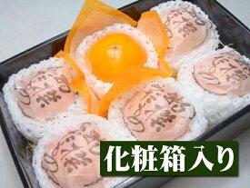 【12月上旬以降予定★】鳥取県産 花御所柿[6個入り化粧箱]【10P05Dec15】