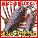幻の特大伊勢海老超特大1kgサイズ(活〆冷凍)