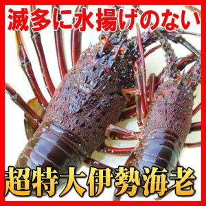 幻の特大伊勢海老超特大800g〜890gサイズ(活〆冷凍)