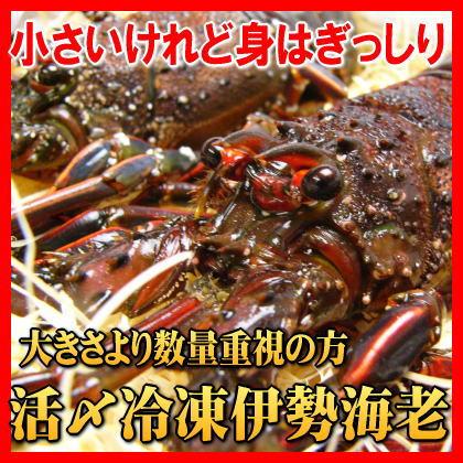 伊勢志摩産伊勢海老 活〆冷凍1kg入り(8尾〜10尾)