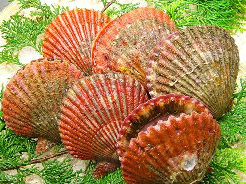 濃厚な味と甘味が特徴!伊勢志摩の貝です!あっぱっぱ貝
