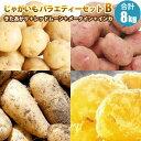 新じゃがいも 北海道産 ジャガイモ バラエティーセットB 送料無料 じゃがいも 4種 きたあかり レッドムーン メークイ…