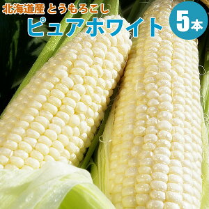 とうもろこし ピュアホワイト 5本 とうもろこし 北海道 朝もぎ 白い とうもろこし 送料無料 生 生食 北海道 トウモロコシ ピュアホワイト ギフト 贈り物 贈答 プレゼント 内祝い お取り寄せ