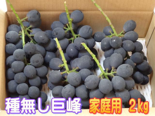 【送料無料】【ご家庭用】信州長野県産、種無し巨峰2kg!7月中旬頃より順次発送いたします。