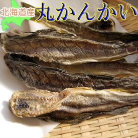 【メール便送料無料】北海道産 丸かんかい(氷下魚)/350g(11本〜13本)