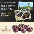 アメリカンチェリー(約500g)オレゴン産大粒チェリーダークチェリー果物メイン画像