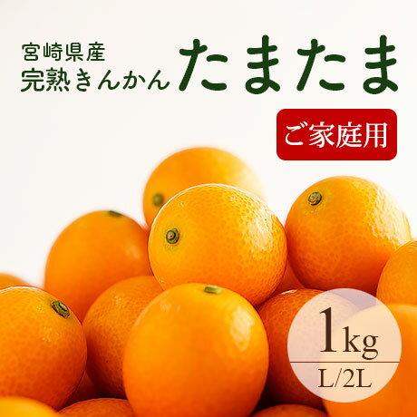 【送料無料】完熟きんかん「たまたま」L〜2Lサイズ 約1kg ご家庭用 おためし 宮崎県産
