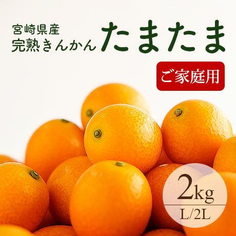 【送料無料】完熟きんかん「たまたま」L〜2Lサイズ 約2kg ご家庭用 おためし 宮崎県産