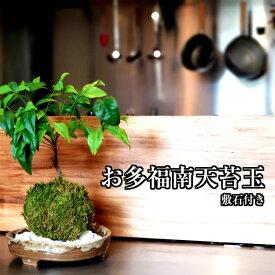 苔 苔玉 南天 誕生日 【 南天苔玉 】 観葉植物 インテリア 苔