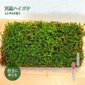 苔 苔玉 テラリウム 盆栽 【 天然 ハイゴケ 1パック分 】 観葉植物 園芸
