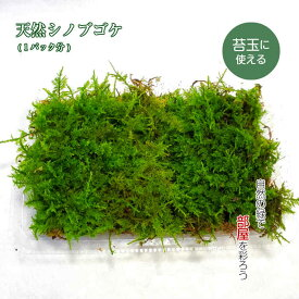 苔玉 苔 テラリウム 苔盆栽 【 天然 シノブゴケ 】 観葉植物 園芸