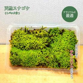 苔 テラリウム 観葉植物 園芸 【 天然 スナゴケ 】