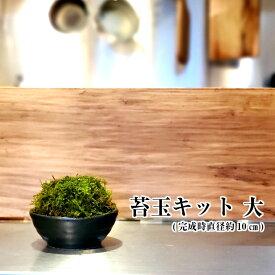 苔玉 苔 苔玉キット ハイゴケ 【苔玉キット 大 】