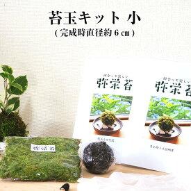 苔玉 苔 苔玉キット 1000円ポッキリ 【 苔玉キット 小 】