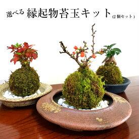 苔 キット 苔盆栽 苔玉 【 選べる縁起物苔玉キット(2個セット) 】