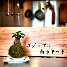 苔玉 苔 苔玉キット 父の日 【 ガジュマル苔玉キット 】