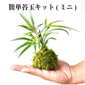 苔玉 苔 苔玉キット ハイゴケ 【 簡単苔玉キット(ミニ) 】