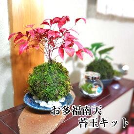 苔玉 苔 苔玉キット ハイゴケ 【 お多福南天苔玉キット 】