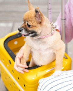 Rui&Aguri ペットキャリーケース ハードタイプ イエロー 幅42×奥行27×高さ31cm (PK-02B-42) 【ペット用品】 ルイ&アグリ 黄 お出かけ 旅行ハウス 車内ケージ 犬イヌ猫ネコ用 キャリーバッグ かわ