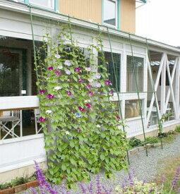 【4968438012155】DAIM 緑のカーテン 伸縮立掛け180cm幅 高さ160〜300cm【頑張って送料無料!】