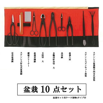 The first bonsai to iron bonsai 10 piece set